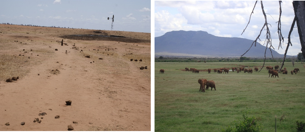 Figure 2: Elephant impact around watering points in the TENP: (a) An area of trampling and vegetation destruction, with abundant elephant dung. (b) An area of expanding grassland following elephant damage. (Photo: Jngatia, TENP, 2011)