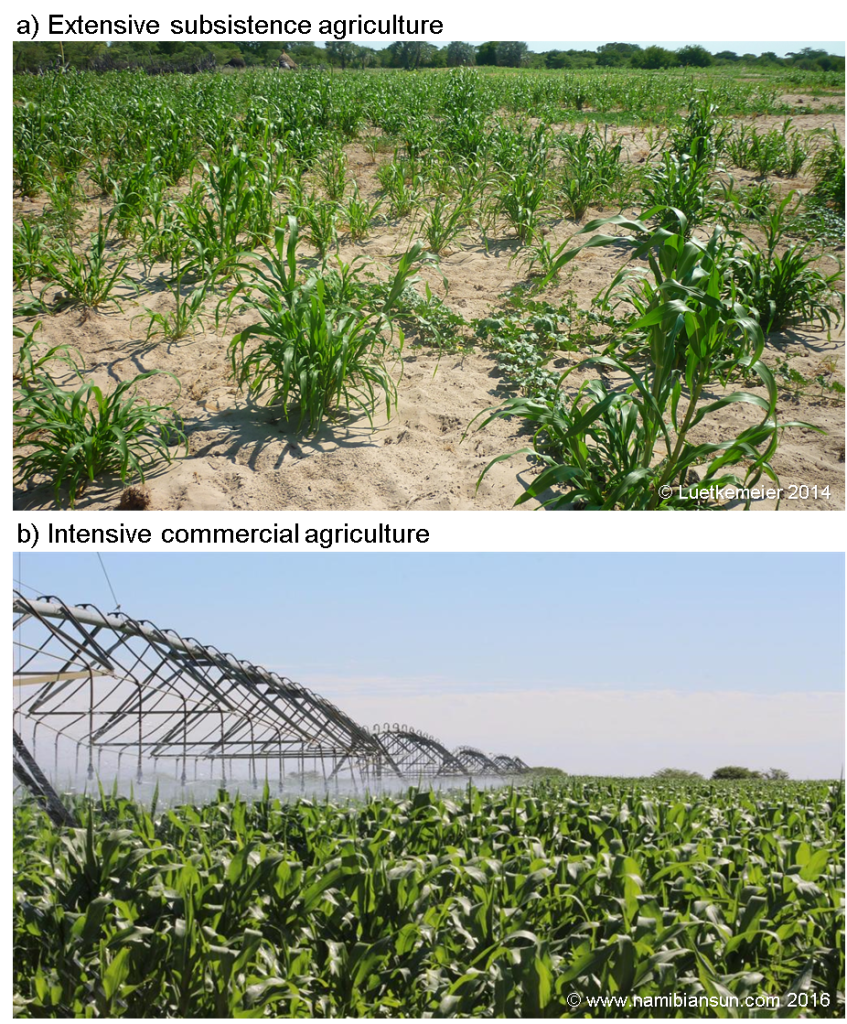 Figure 2: Pearl millet cultivation in (a) extensive rainfed subsistence agriculture, and (b) intensive irrigated agriculture, mainly for commercial purposes.